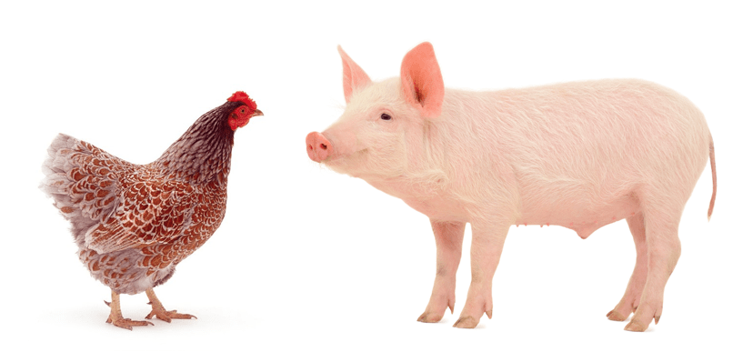 Commitment – Chicken & The Pig